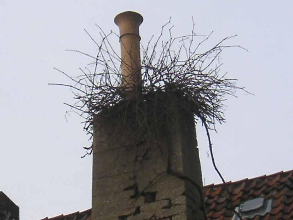 grosses Bild zeigen: Nein es ist kein Storchennest - es ist Hausbegrünung