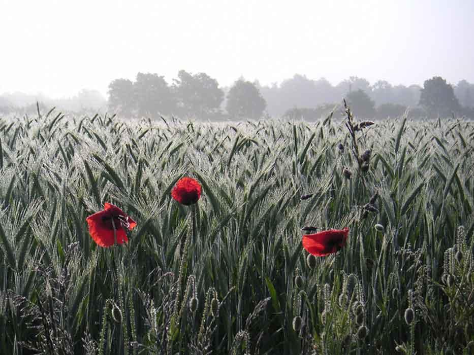 grosses Bild zeigen: Morgenstimmung in Waddenhausen