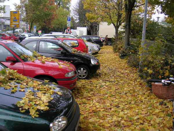 grosses Bild zeigen: Extremes Blätterfallen